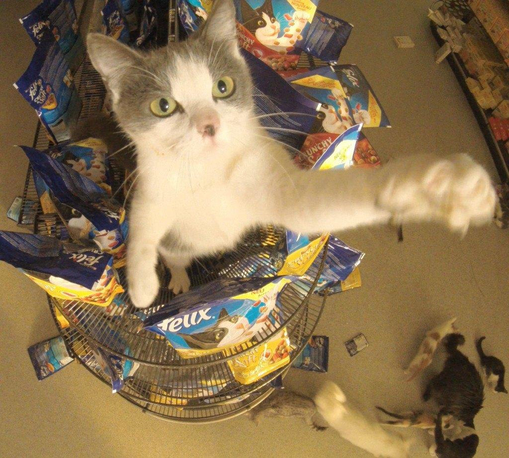 Katze im Supermarkt