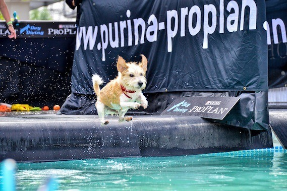 Dog Diving: Purina PRO PLAN